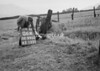 SD990306A, Man marking Ordnance Survey minor control revision point with an arrow in 1950s