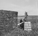 SD950272A, Man marking Ordnance Survey minor control revision point with an arrow in 1950s