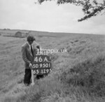 SD950146A, Man marking Ordnance Survey minor control revision point with an arrow in 1950s