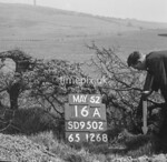 SD950216A, Man marking Ordnance Survey minor control revision point with an arrow in 1950s