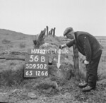 SD950256B, Man marking Ordnance Survey minor control revision point with an arrow in 1950s
