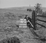 SD950232A, Man marking Ordnance Survey minor control revision point with an arrow in 1950s