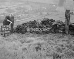 SD960099A, Man marking Ordnance Survey minor control revision point with an arrow in 1950s