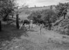 SD930166B, Ordnance Survey Revision Point photograph in Greater Manchester