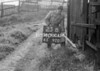 SD910623B, Ordnance Survey Revision Point photograph in Greater Manchester