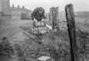 SD890506B, Ordnance Survey Revision Point photograph in Greater Manchester