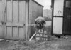 SD910643B, Ordnance Survey Revision Point photograph in Greater Manchester
