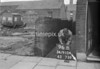SD910496B, Ordnance Survey Revision Point photograph in Greater Manchester