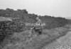 SD911703B, Ordnance Survey Revision Point photograph in Greater Manchester