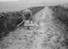 SD970509B, Man marking Ordnance Survey minor control revision point with an arrow in 1950s