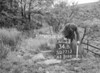 SD771334B, Ordnance Survey Revision Point photograph in Greater Manchester
