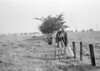 SD781355A, Ordnance Survey Revision Point photograph in Greater Manchester