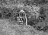SD801362A, Ordnance Survey Revision Point photograph in Greater Manchester