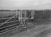 SD801311B, Ordnance Survey Revision Point photograph in Greater Manchester