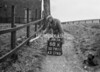 SD781168K, Ordnance Survey Revision Point photograph in Greater Manchester