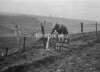 SD750653A, Ordnance Survey Revision Point photograph in Greater Manchester