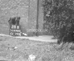 SD690028B, Man marking Ordnance Survey minor control revision point with an arrow in 1950s