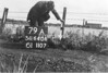 SD640679A, Man marking Ordnance Survey minor control revision point with an arrow in 1940s