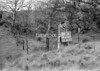 SD630791A, Man marking Ordnance Survey minor control revision point with an arrow in 1950s
