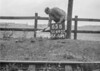 SD640265B, Man marking Ordnance Survey minor control revision point with an arrow in 1940s