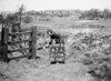 SD570863A, Man marking Ordnance Survey minor control revision point with an arrow in 1950s