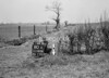 SD580880A, Man marking Ordnance Survey minor control revision point with an arrow in 1950s