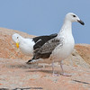 Rude Bird - Narragansett, RI