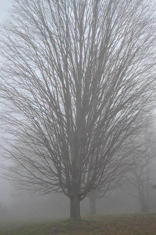 Morning Fog - Reeves Visitor Center, Harriman State Park, NY