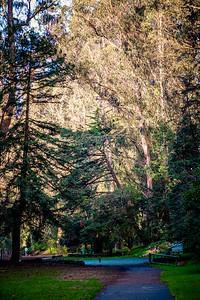 Stern Grove