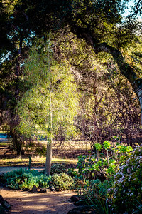 Arizona Cactus Garden at Stanford
