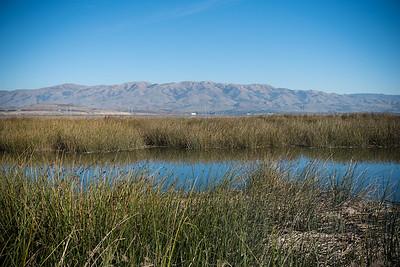 Mallard Slough Trail, Don Edwards San Francisco Bay National Wildlife Refuge