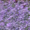 "<b><i><font size=""3"">""Lavender Dreamscape""</font></i></b> 2008"