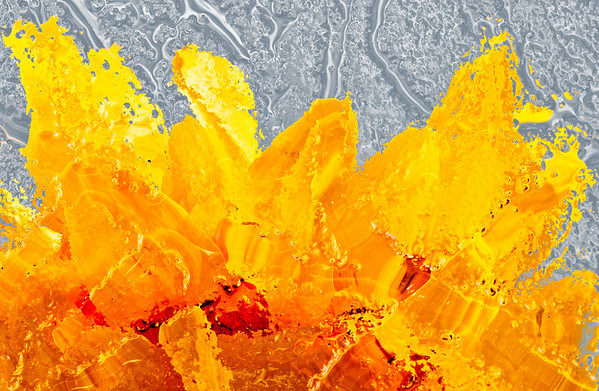 "<b><i><font size=""3"">""Sunflower Lava""</font></i></b> <font size=""1"">Sunflower 'Choco Sun' <i>(Helianthus annuus Choco Sun)</i></font> 2008"