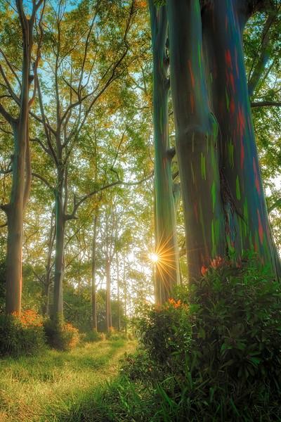 Rainbow Grove