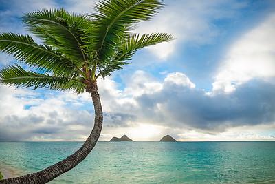 Lazy Palm Tree