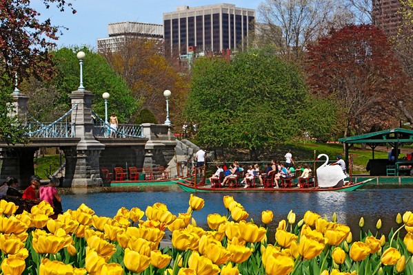 "<font size=""3""><I>Springtime in Boston</I></font> &nbsp;&nbsp;&mdash;&nbsp;&nbsp; <font size=""2"">Swan Boats in the Public Garden &nbsp;</font> <font size=""1"">April 29, 2009<font><br>"