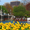 "<font size=""3""><I>Springtime in Boston</I></font>   —   <font size=""2"">Swan Boats in the Public Garden  </font> <font size=""1"">April 29, 2009<font><br>"