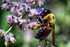 Pollinator Supreme