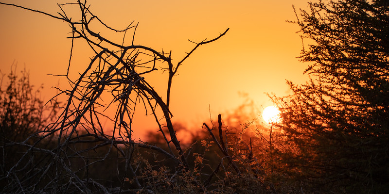 Sunrise in the African bush