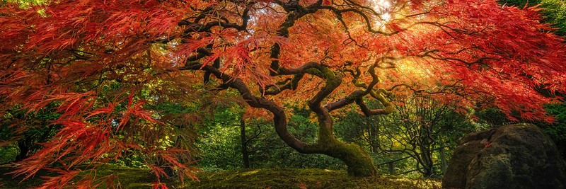 Mystic Maple