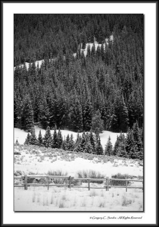 New-fallen snow in the Bighorn Mountains of Wyoming.  Shot on Kodachrome, converted digitally to B&W.  Color version can be found at this link ... http://gcsundra.smugmug.com/Collection/Landscapes/Landscapes-I/i-dHqKgMd/0/XL/Bighorn_Mtns_001f-XL.jpg
