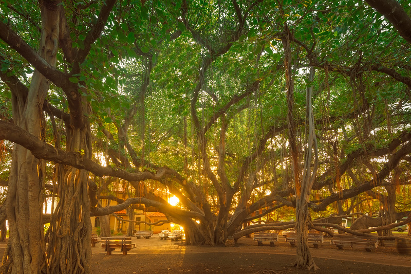 Banyan by the Sea