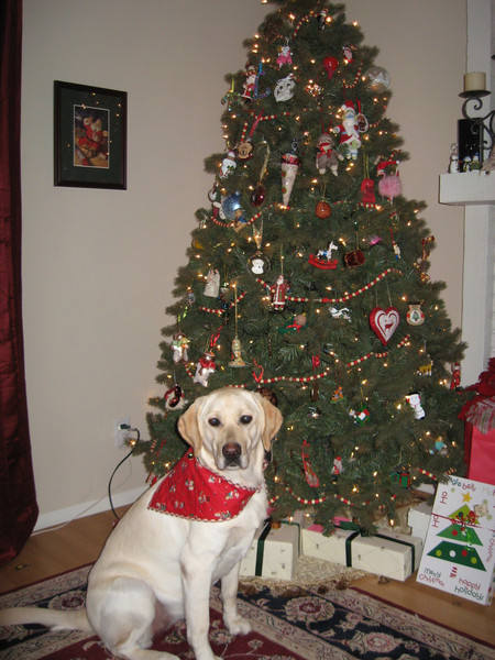Pearl's Christmas bandana Grandma Fiore made for her