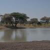 Lots of wildlife near waterhole