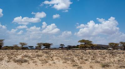 A typical Samburu village