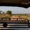Bushbuck crossing