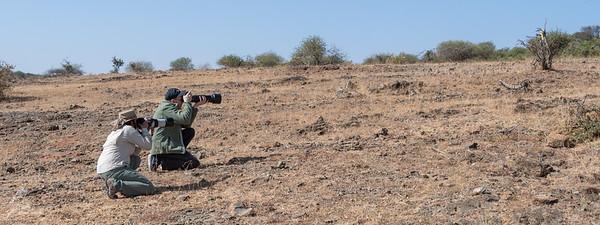 Taking photos of the Elmenteita Rock Agama.