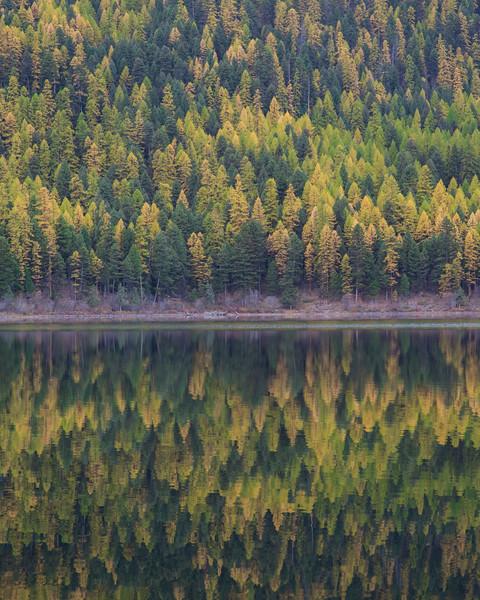 Salmon Lake Trees