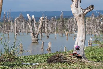 The shore of Lake Naivasha