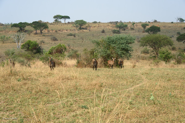 Our very first impression of Murchison Falls NP